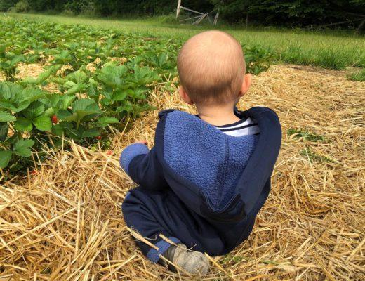 Erdbeeren selbst pflücken in Norderstedt & Quickborn