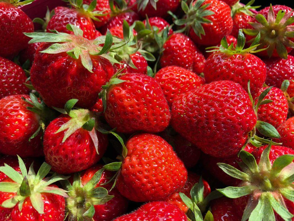 Lecker! Selbst gepflückte Erdbeeren