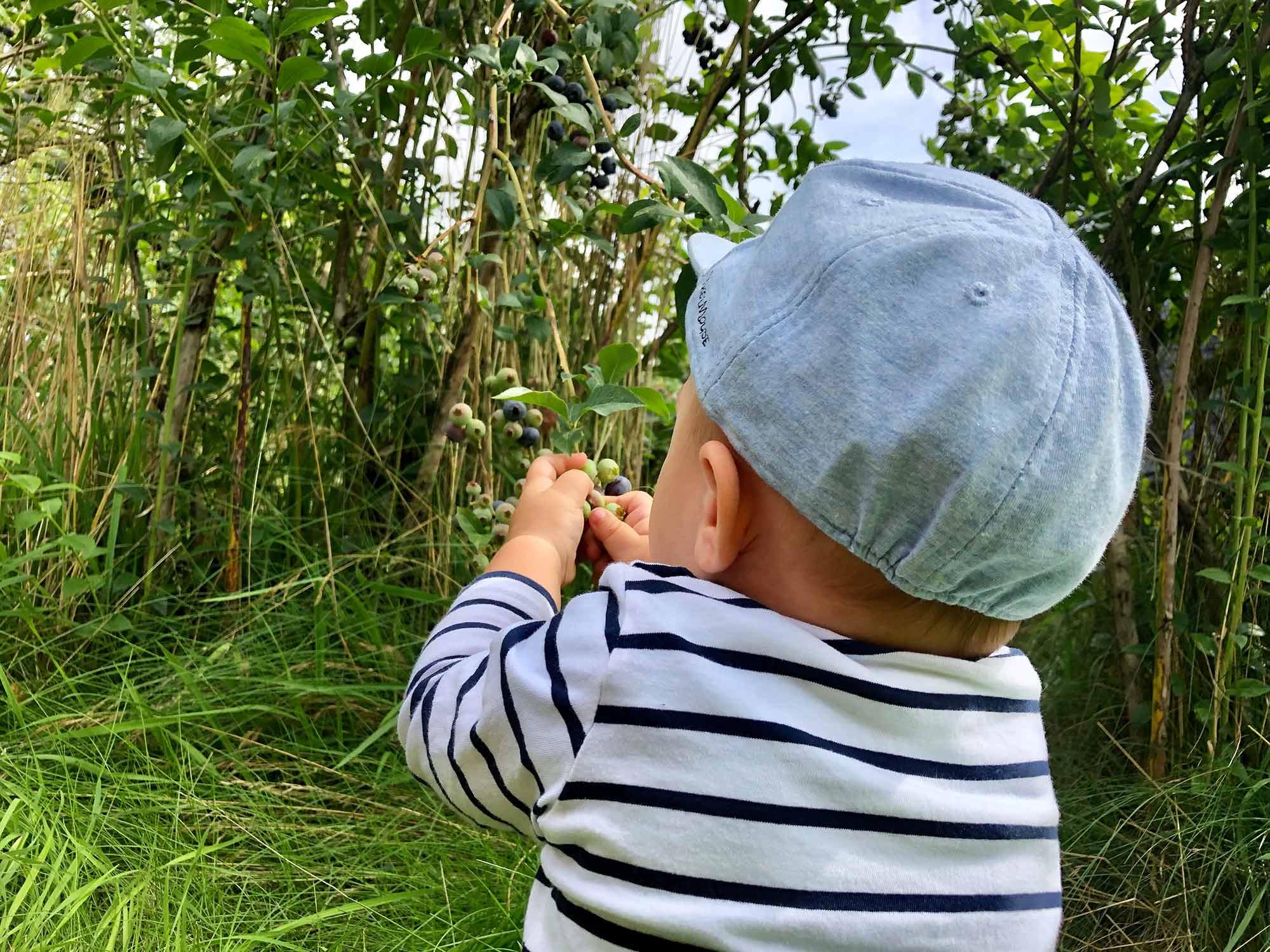 Heidelbeeren selbst pflücken in Willenscharen