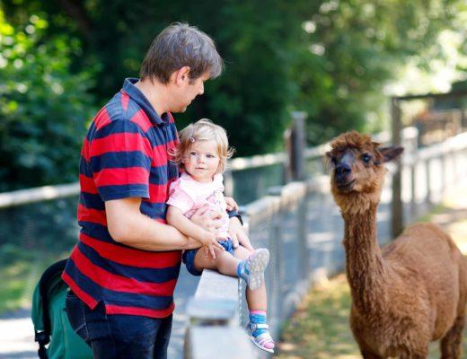 Tierpark Neumünster – Regionale Tiere hautnah erleben + toller Spielplatz